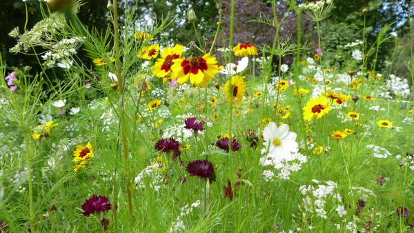 Wild flowers as you enter the gardens.