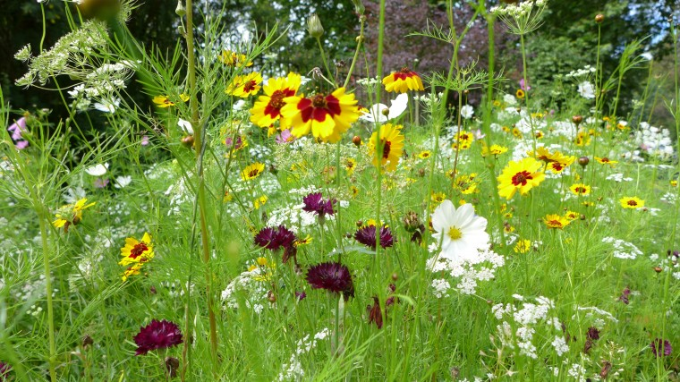 Wild flowers as you enter the gardens.