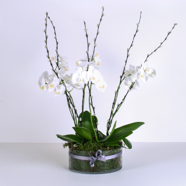 Luxury Orchid Planter