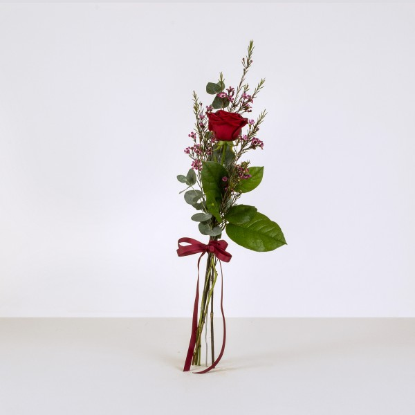 Single red rose and foliage