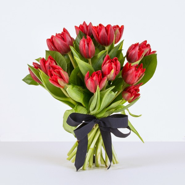 Valentines red tulip ht