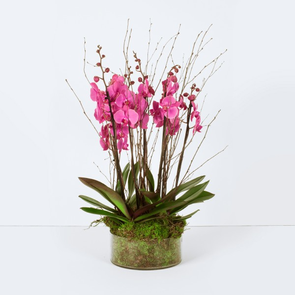 Opulent Orchid Planter Pink